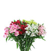 FLOWER - ALSTROEMERIA BUNCH
