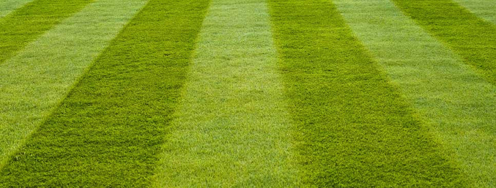 Lawns, Ovals & Turf Growers
