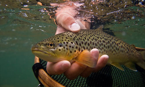 Private Fly Fishing Water Ladder Ranch