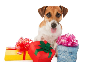 The Best Pet Gifts: Designer Pet Accessories and Treats!