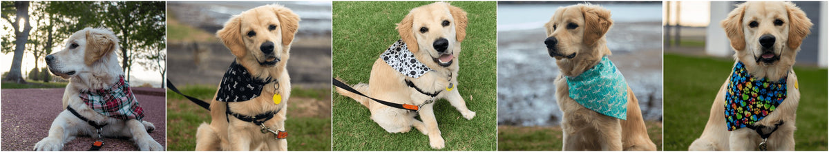 Pet Boutique's range of Designer Dog Bandanas