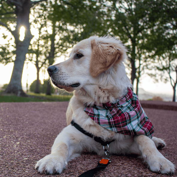 Dog Bandanas - Plaid - Classic