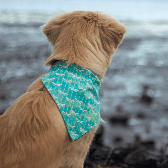 Leo wearing an aquamarine dragonfly dog bandana nz
