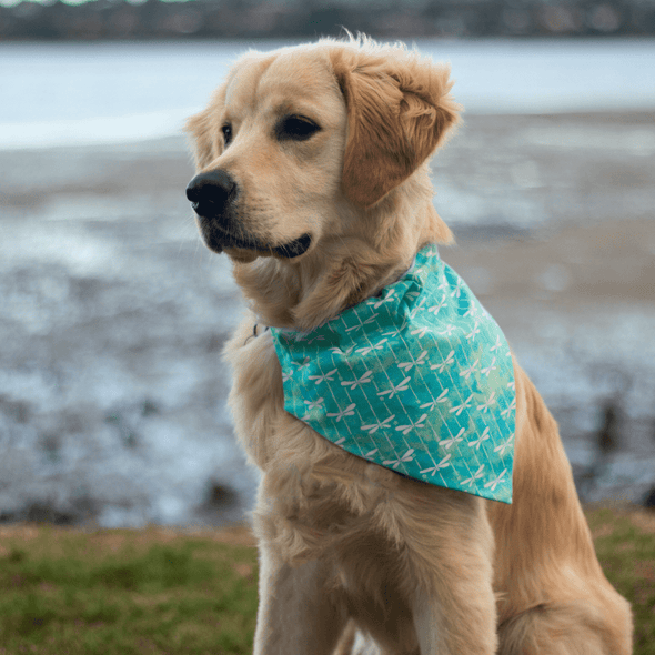 Leo modeling the aquamarine dragonfly dog bandana nz