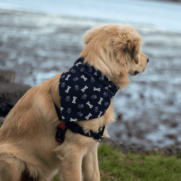 Leo wearing a Bones & Pawprint Dog Bandana NZ side view