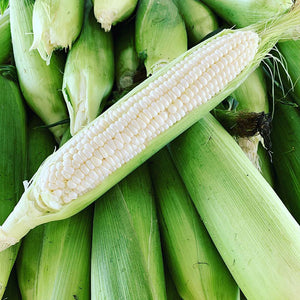 Sweet Corn- 1 dozen ears