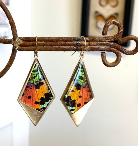 Real Sunset Moth Earrings