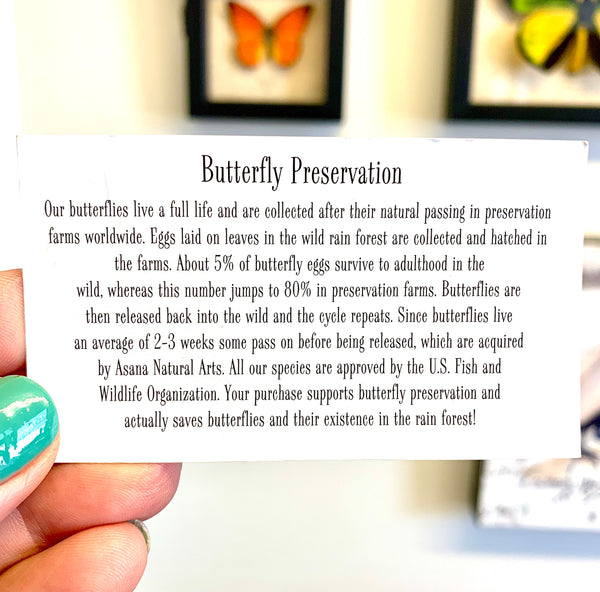 informational card about butterfly preservation
