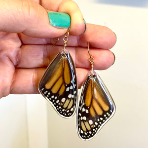 Real Monarch Butterfly Earrings