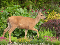 Scram, Deer! How To Keep Deer From Eating Your Plants