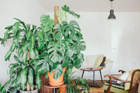 Bringing Your Houseplants Indoors