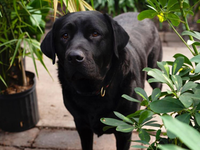 Paws and Plants: The Barlow's Guide to Pet-Friendly Houseplants