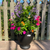 Summer Patio Container Garden