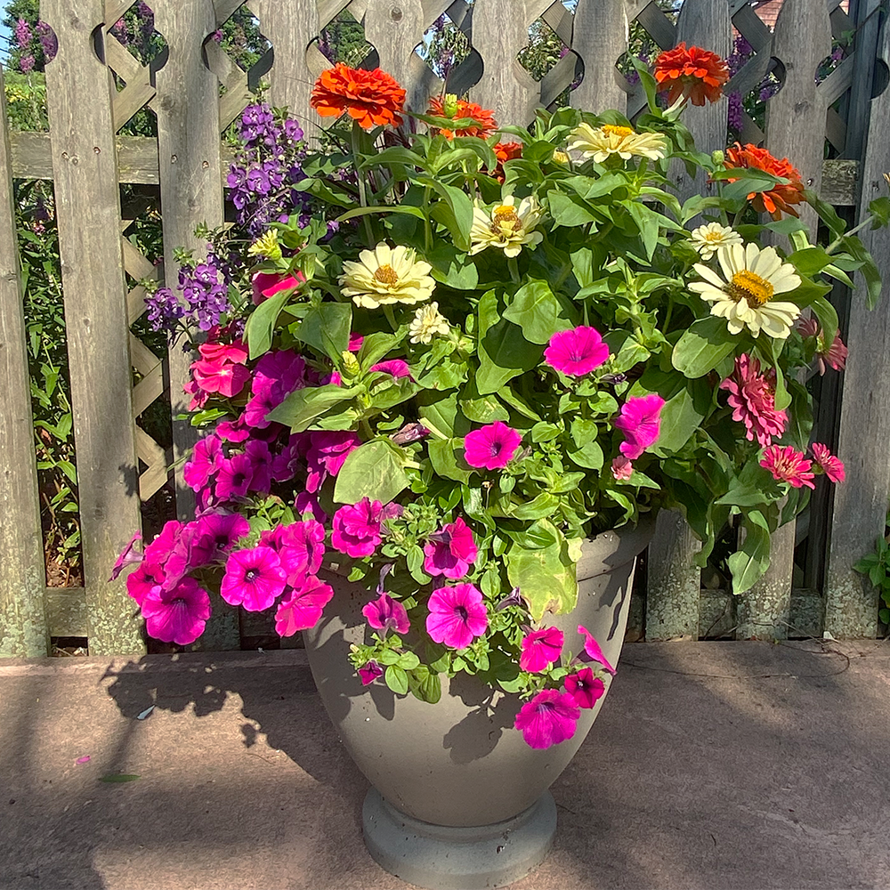 Deluxe Summer Patio Container Garden