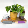 """Shelf-Care"" Houseplant Care Package"