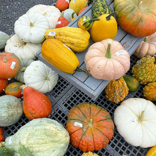 Assorted Large Gourds