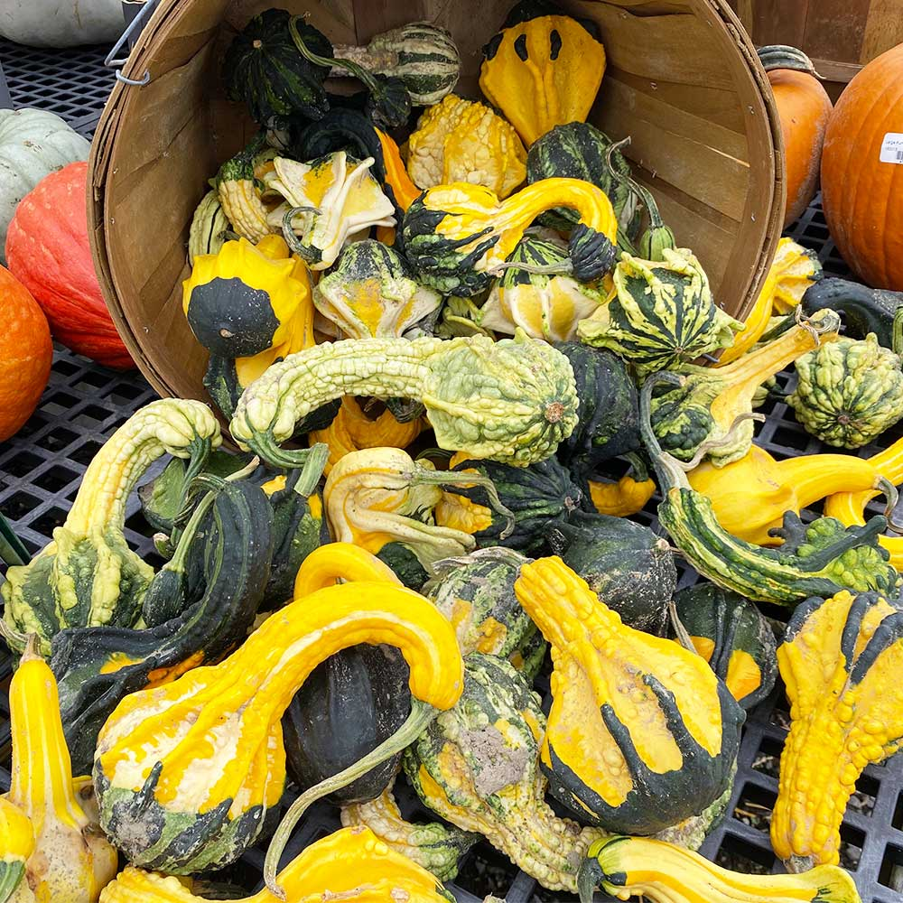 Assorted Mini Gourds
