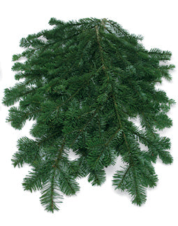 Fresh Silver Fir Bunches