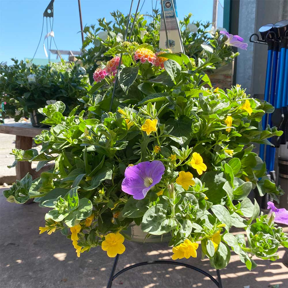 Flowering Combination Hanging Baskets