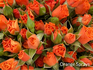 Orange Sprays