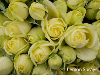 Lemon Sprays