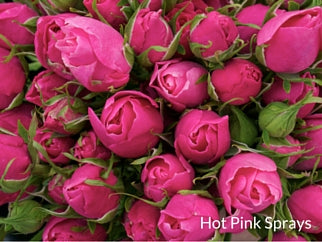 Hot Pink Sprays