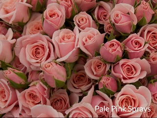 Pale Pink Sprays