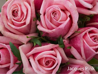 Jacques Pink