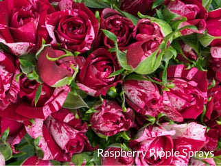 Raspberry Ripple Sprays