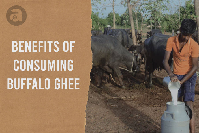 Benefits of Consuming Buffalo Ghee