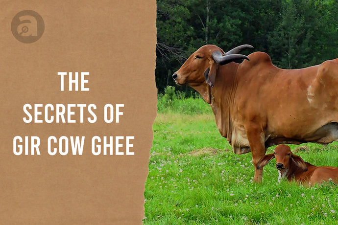 The Secrets of Gir Cow Ghee