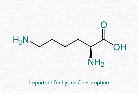 ghee is important for lysine consumption
