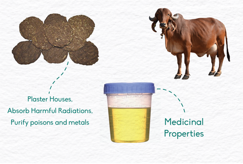 benefits of cow dung and cow urine