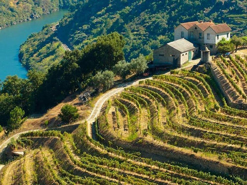 Portugal (Discoverer Series) - December 16th Wine Tasting Collections The Online Wine Tasting Club
