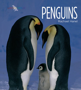 Living Wild: Penguins