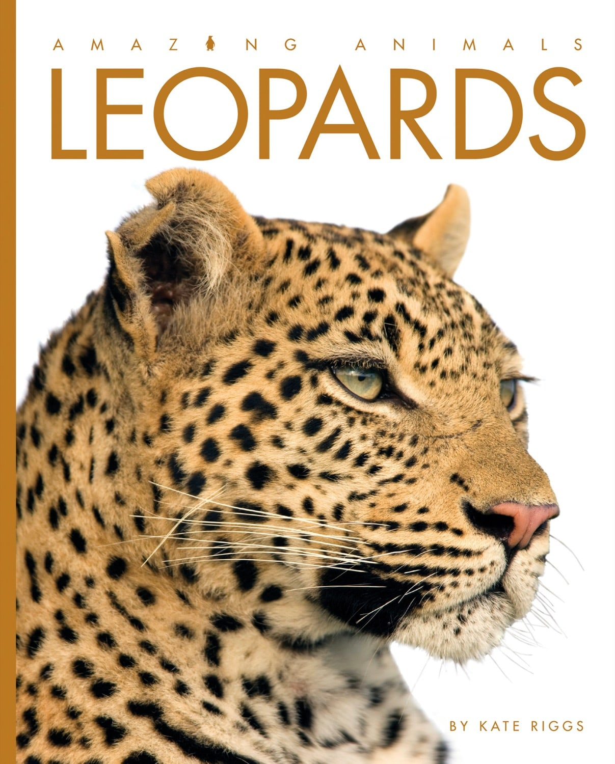 Amazing Animals: Leopards