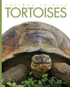 Amazing Animals: Tortoises