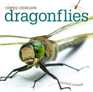 Creepy Creatures: Dragonflies