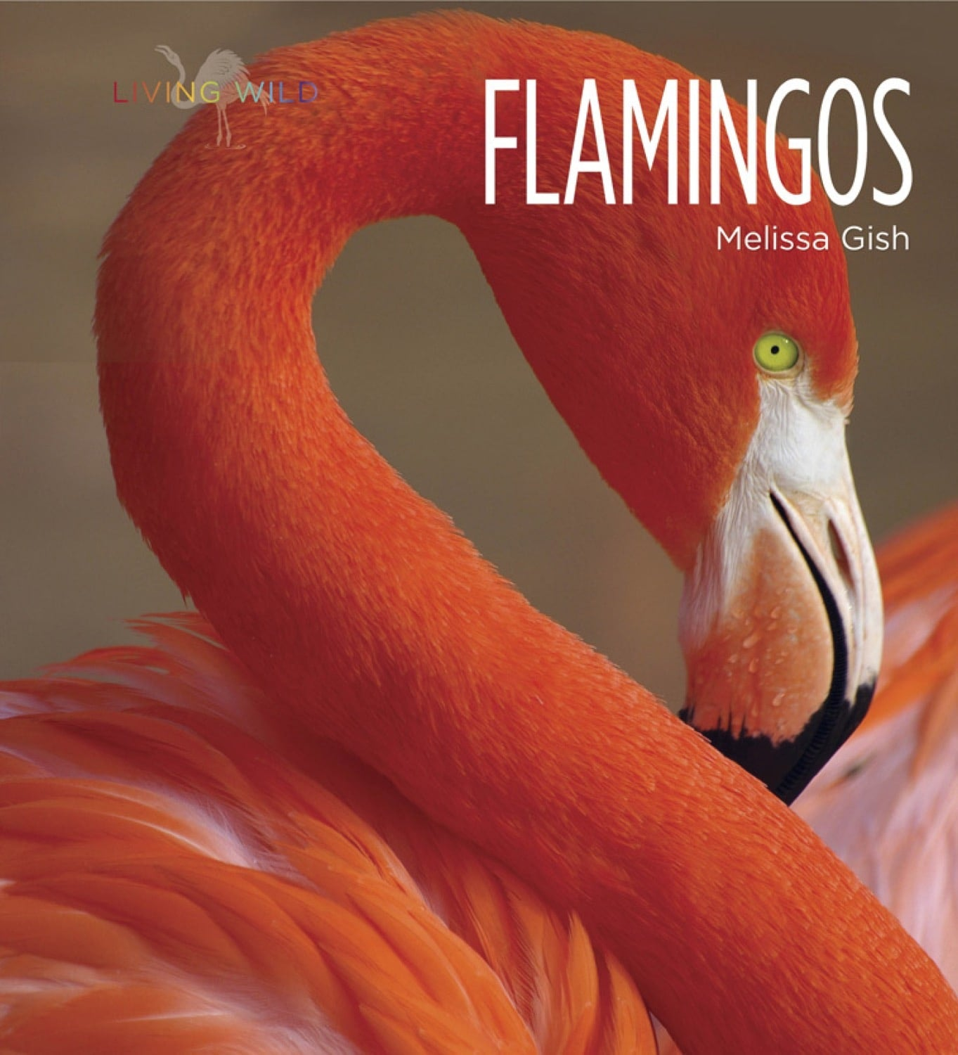 Living Wild: Flamingos