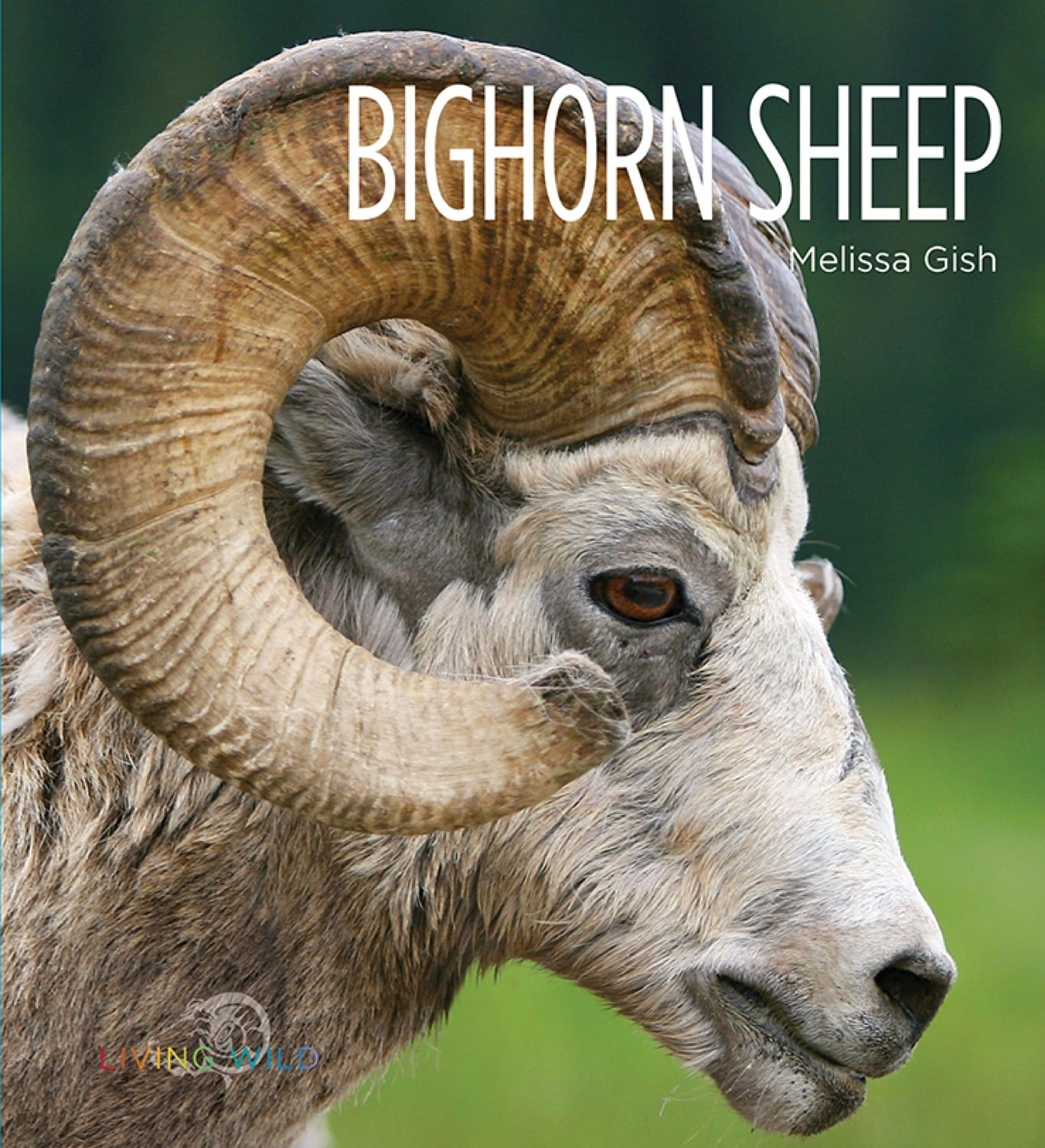 Living Wild: Bighorn Sheep