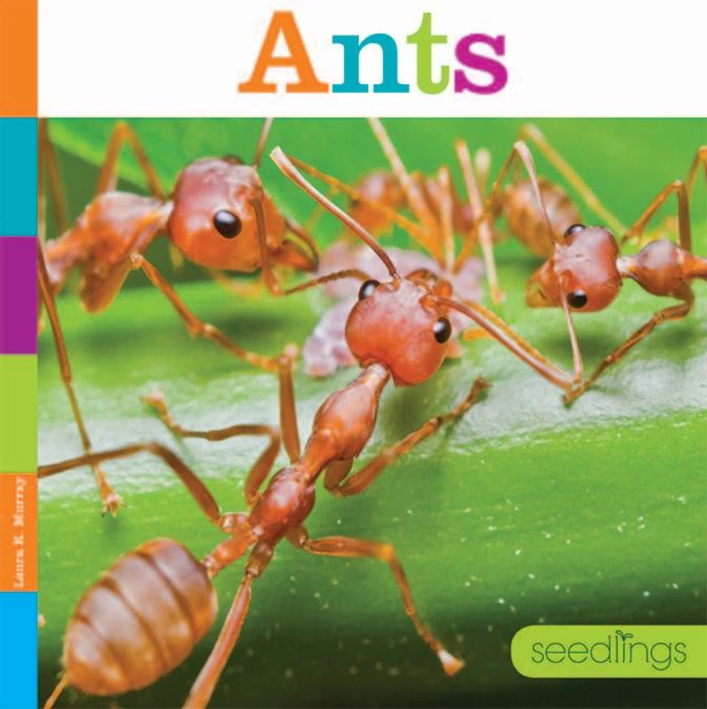 Seedlings: Ants