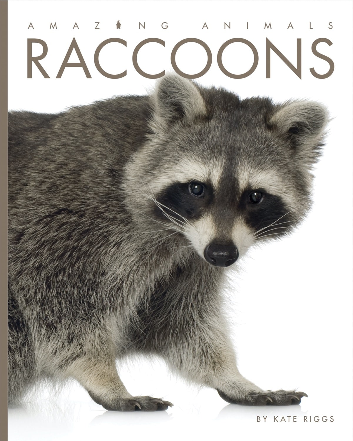 Amazing Animals: Raccoons