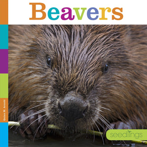 Seedlings: Beavers