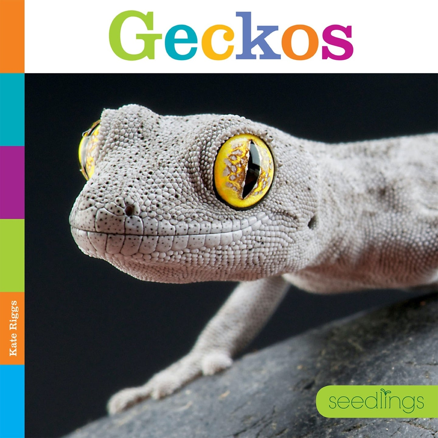 Seedlings: Geckos