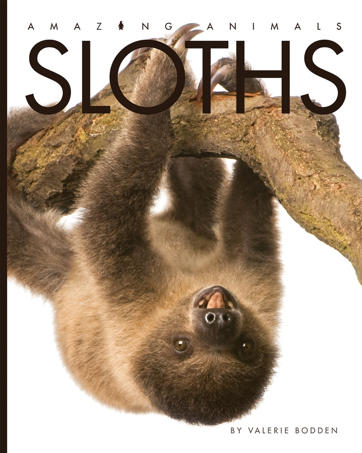 Amazing Animals: Sloths