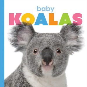 Starting Out: Baby Koalas