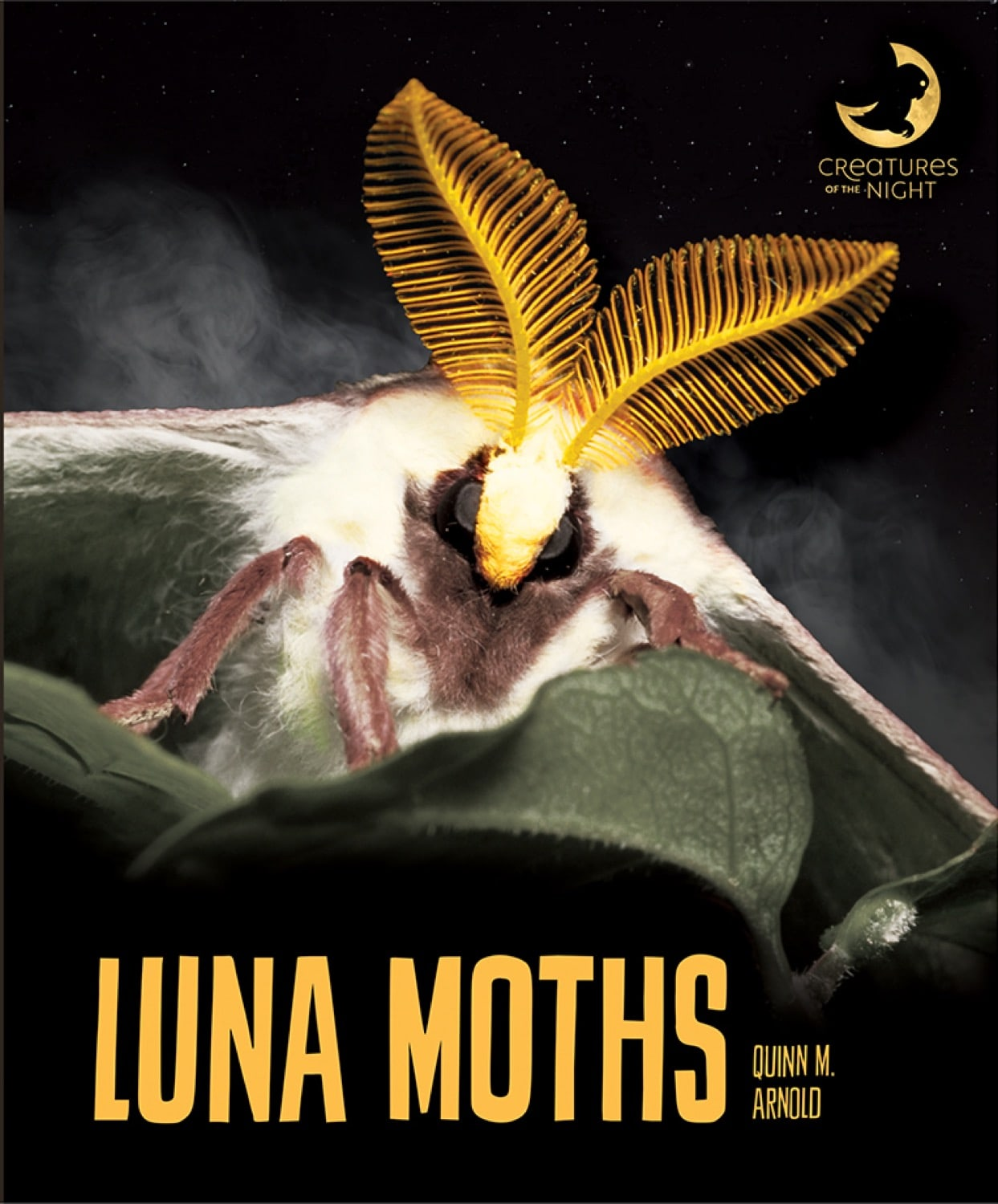 Creatures of the Night: Luna Moths