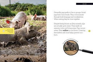 Grow with Me: Pigs