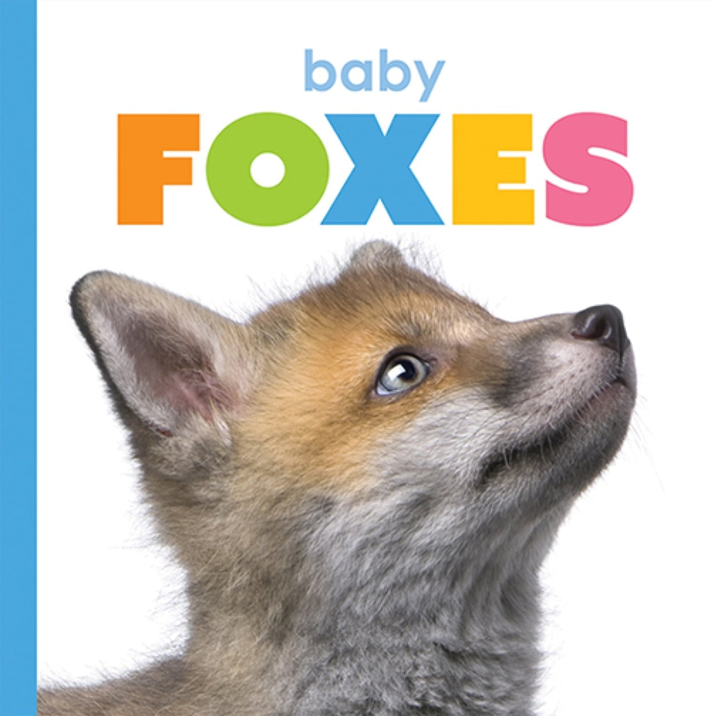 Starting Out: Baby Foxes