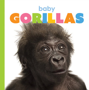 Starting Out: Baby Gorillas